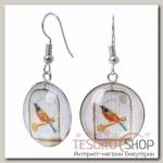 Серьги из стекла Candy птичка, цветные в серебре - бижутерия